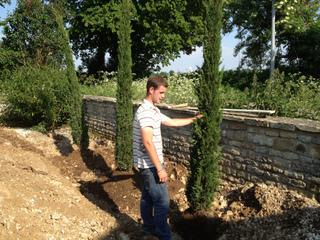 Plantation de cyprès le long d'un mur
