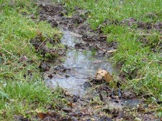 Le drainage du jardin et des plantes en pots