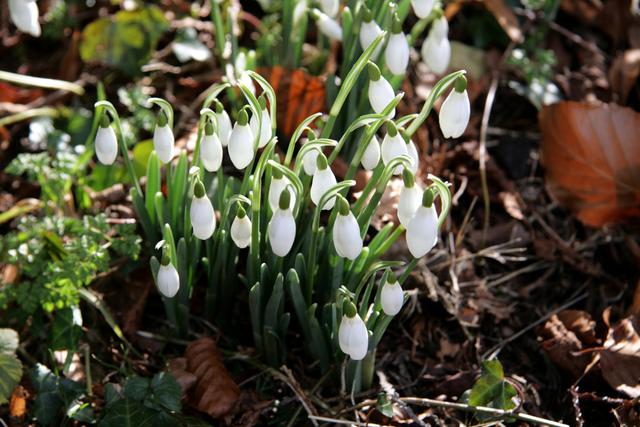 Arbuste avantage coeur hiver tout - Fleur au coeur noir ...