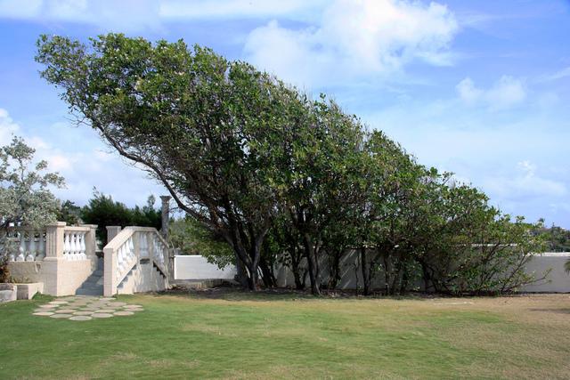 Le vent : conséquences au jardin