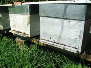 Conseils d'apiculture pour le mois d'octobre