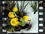 Des fleurs au coeur de l'hiver