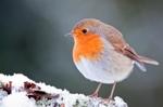 Rendez-vous au jardin les 25 et 26 janvier pour compter les oiseaux !