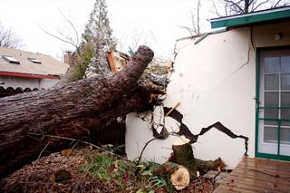 Un arbre tombé sur une maison