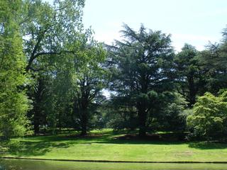 Grands arbres : choix d'espèce, plantation