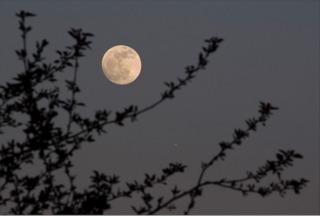 Lune et jardin