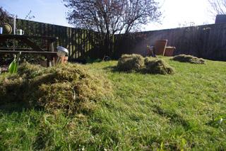 Tas de mousse sur la pelouse