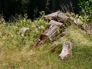 Tas de bois dans le jardin