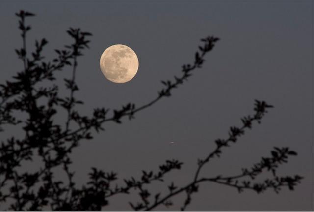 Jardiner calendrier lunaire for Jardin lune fevrier 2015