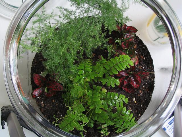 Terrarium Choix Du Recipient Des Plantes Et Mise En Place