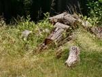 Le bois mort au jardin