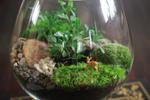 Créez un terrarium