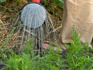 Un potager sans entretien : quelles plantes, astuces de culture