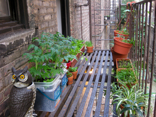 Légumes en pots - Jardin suspendu