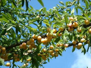 Fruitiers faciles pour débutant