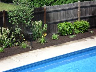 Plantes récemment installées autour de la piscine