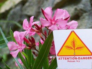 Plantes toxiques au jardin et dans la maison for Plante au jardin