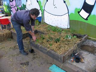 Paillage de légumes - Potager urbain en carrés