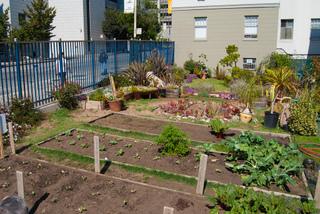Jardin potager en ville