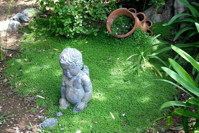 Helxine ou h lixine for Jardin japonais plantes couvre sol