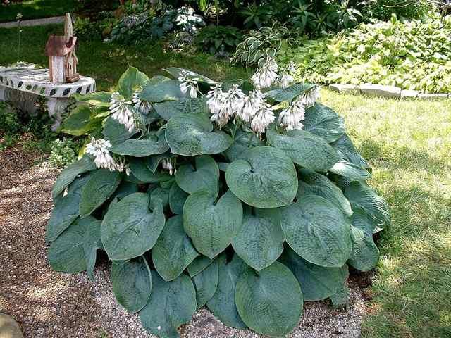 plante fleurs blanches tout. Black Bedroom Furniture Sets. Home Design Ideas