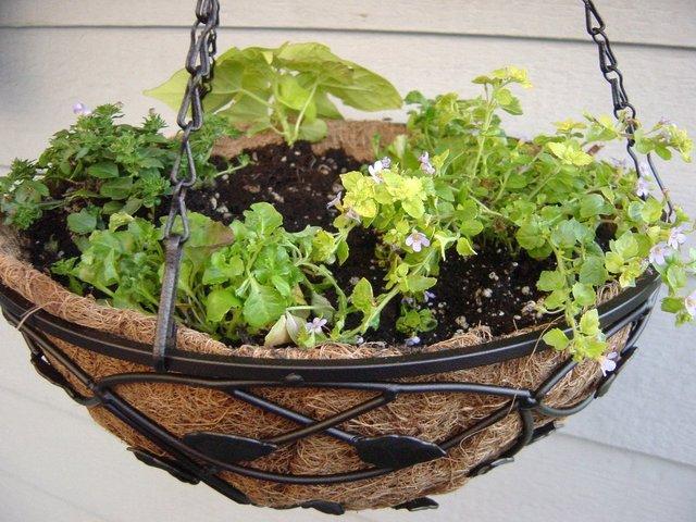 Un panier fleuri suspendu pour l 39 t - Suspension pour plante exterieur ...