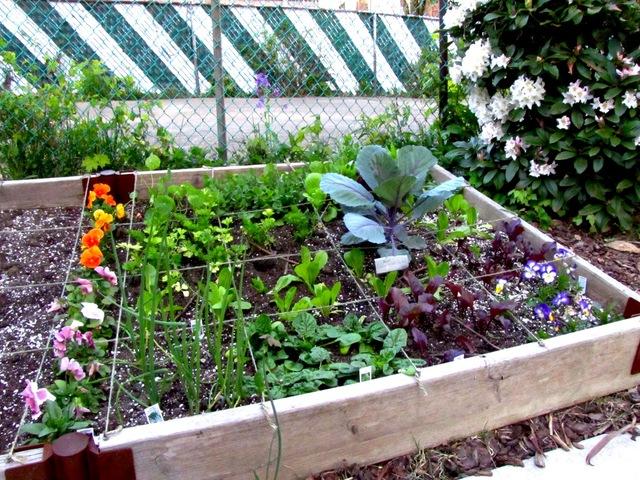 Potager quelle surface for Amenager un petit jardin carre
