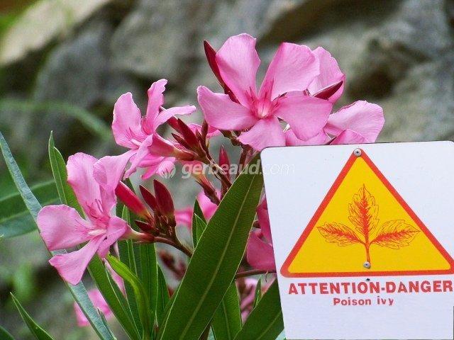 Plantes toxiques au jardin et dans la maison