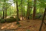 Mieux connaître nos forêts