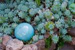 Plantes à feuillages bleutés