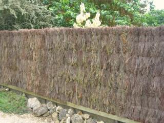 Brande de bruyère épaisse - Clôture naturelle