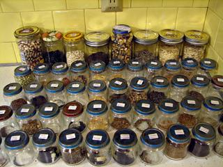 Stockage de graines - Bocaux de récup étiquetés
