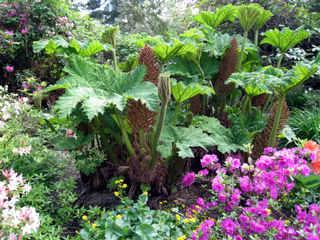 Scène exotique dans un jardin humide