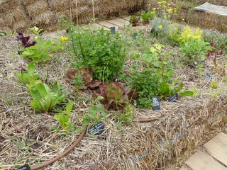 Légumes cultivés sur paille