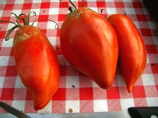 Tomate 'Cornue des Andes'