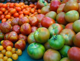 Tomates : les meilleures variétés