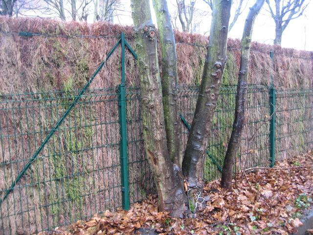 Panneau en bois pour jardin valdiz - Comment fixer panneau bois sur grillage ...