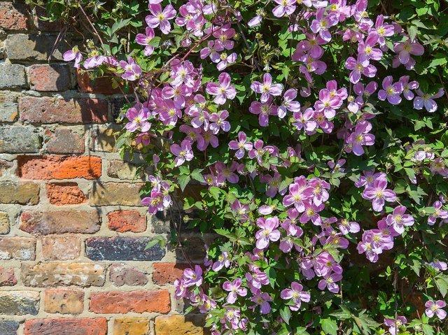 Choisir une plante grimpante - Quelle plante mettre sur une terrasse ...