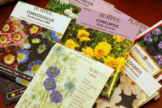 Calendrier des semis de fleurs en début d'année