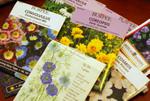 Semis de fleurs : calendrier de début d'année