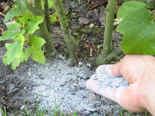 cendre de bois et jardinage cologique