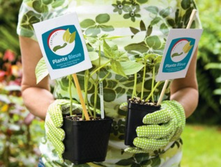 Label Plante Bleue / Valhor
