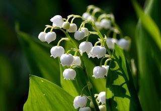 Des plantes parfumées pour chaque saison