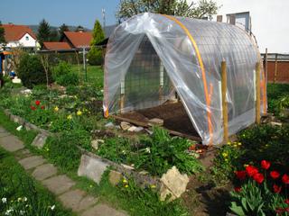 Serre pour culture de tomates sous abri