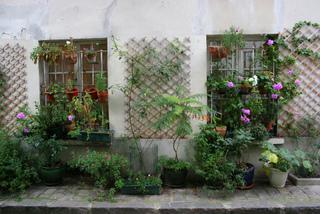 Pots et plantes grimpantes sur un trottoir