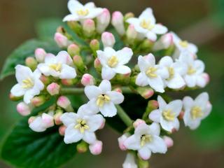 Des Plantes Parfumees Pour Chaque Saison