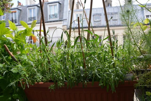face la s cheresse comment s 39 adaptent les plantes. Black Bedroom Furniture Sets. Home Design Ideas