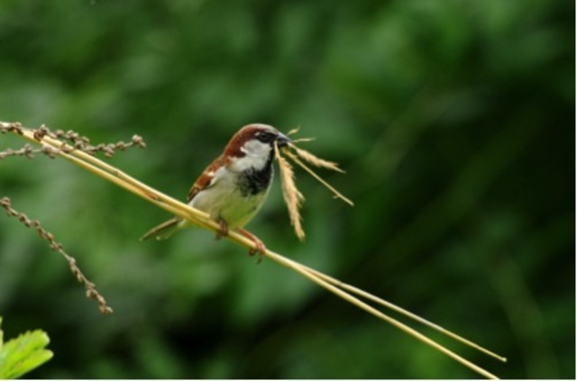 24-25 mai 2014 : comptage des oiseaux du jardin avec la lpo