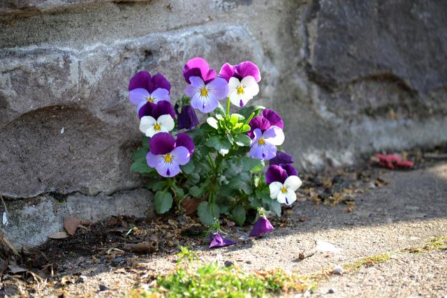 planter et semer dans la rue, devant la maison