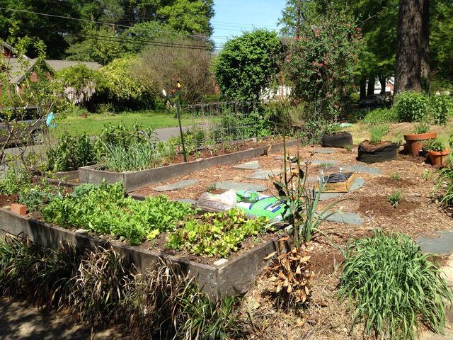 Canicule et sécheresse : limiter les dégâts